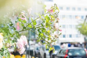 2017-ons-Streetparade og alexparken-SiljeSandøy-3139